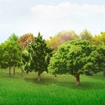 Trees Vector Collection Pack [AI File]