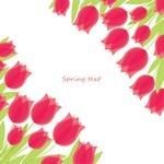 Flower, Tulip Background  01