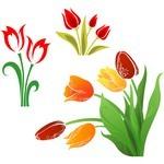Flower, Tulip 01