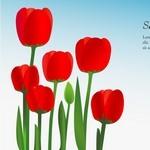 Flower, Tulip Background