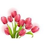Flower, Tulip 03