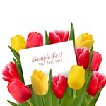 Flower, Tulip Background 04