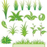 Bamboo and Grass Plant Vector 01