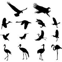 Various Birds Silhouettes 01