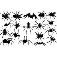 Spider silhouettes