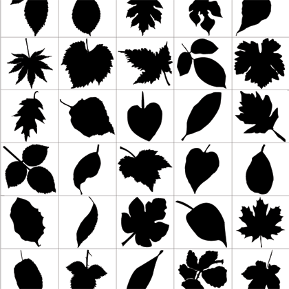 Leaf Silhouette png
