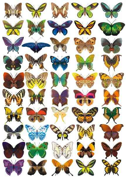 50 butterflys vector