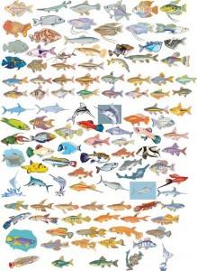 Different Fish Vector Set