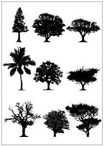 trees_set-05-2011