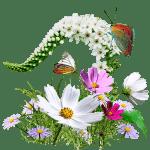 flowers_wildflowers