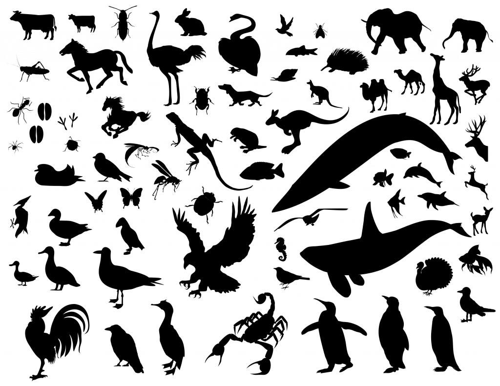 Animal Silhouette Vector Pack Vector Icon Template Clipart