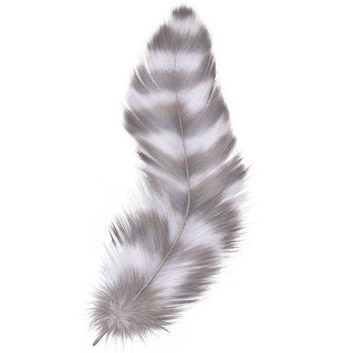 Beautiful Feathers 512x512 [PNG Files] png