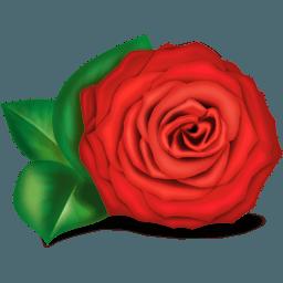 rose1 vector