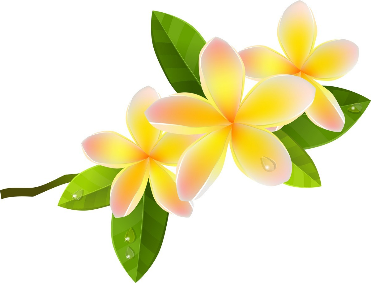 Flower 05 png