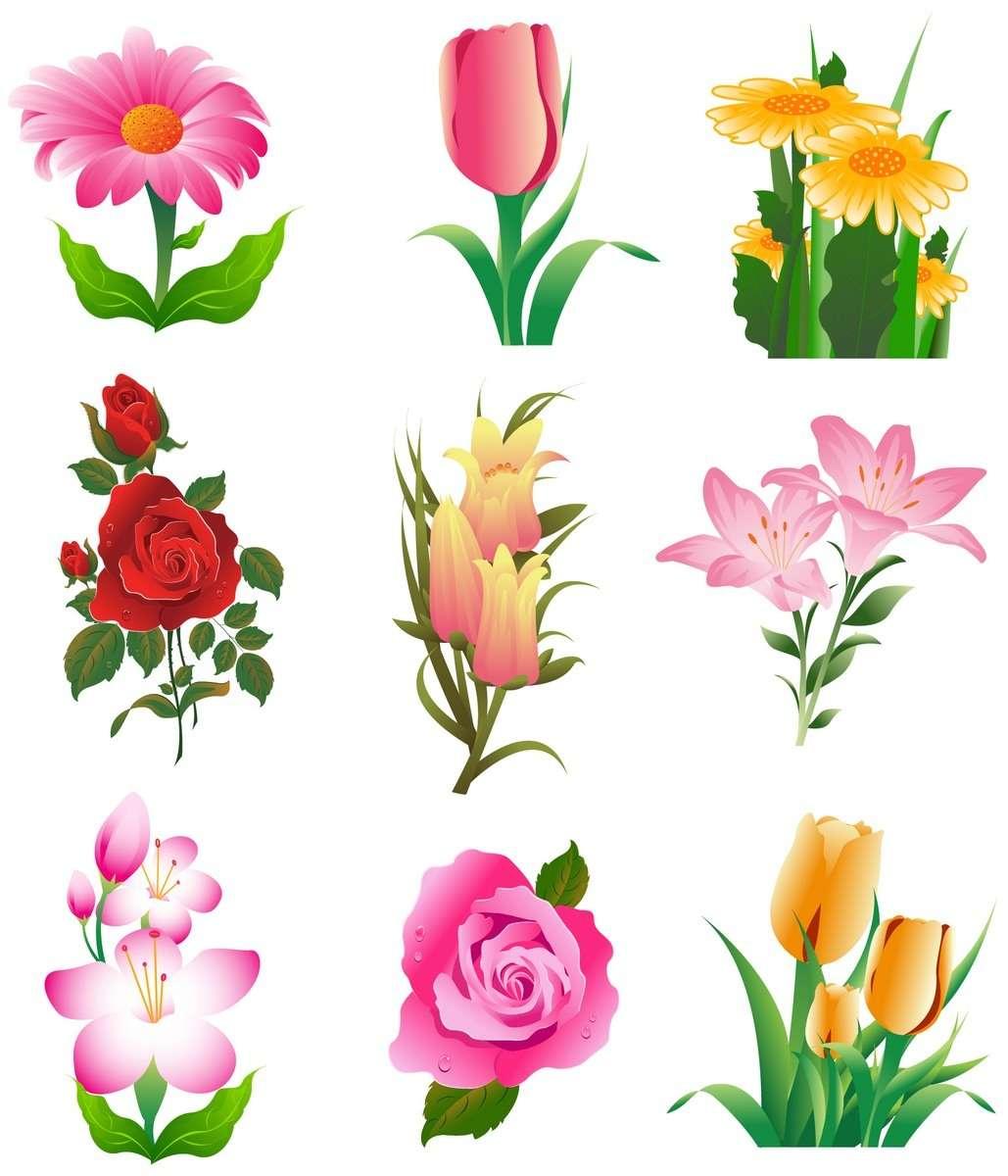 Flower, Rose, Tulip