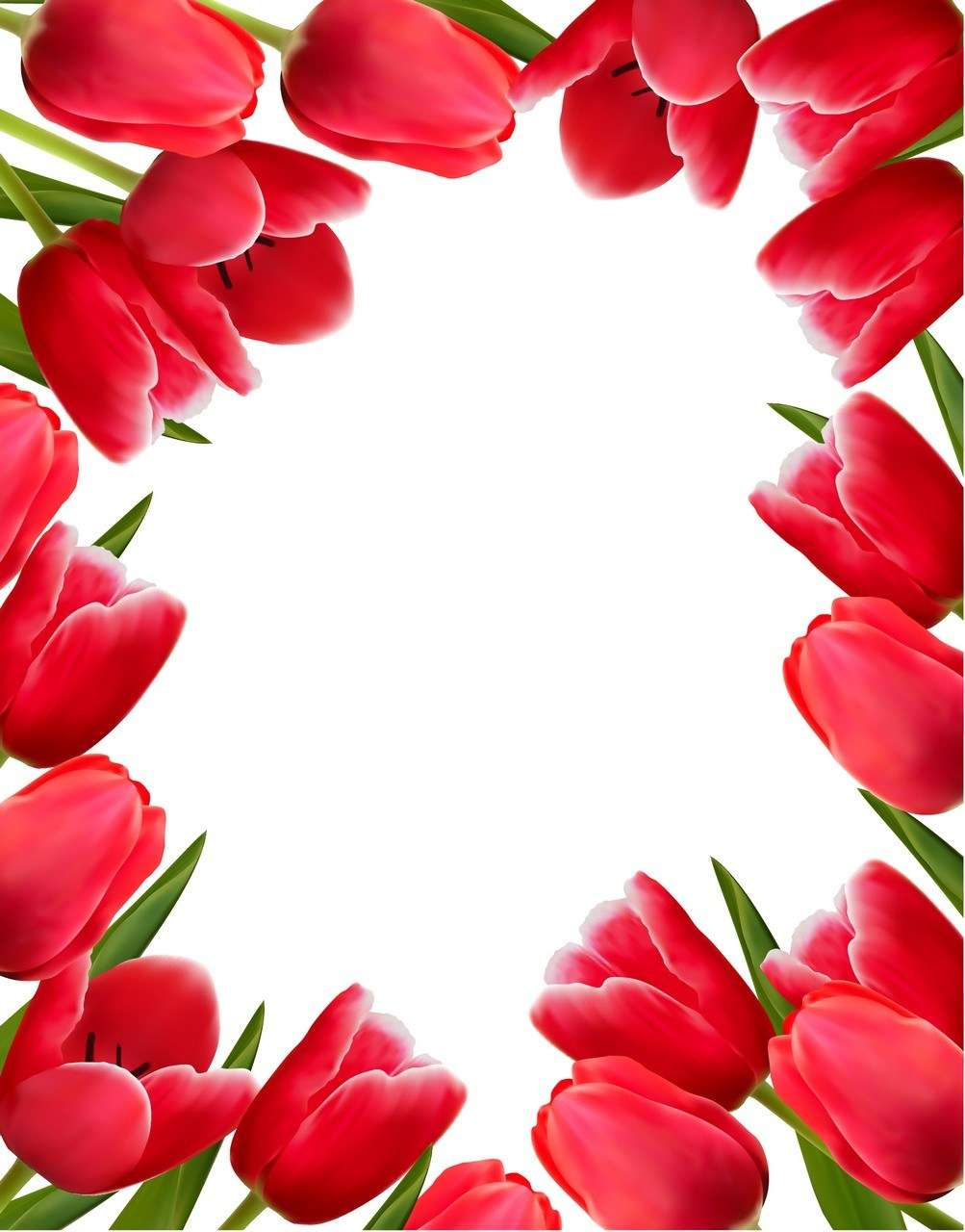 Flower, Tulip Background  02 png