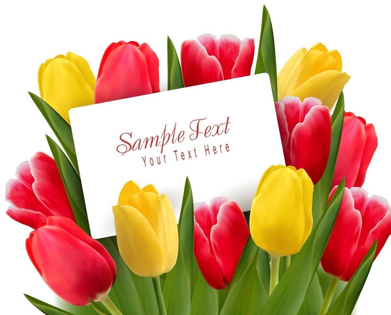 Flower, Tulip Background 04 png
