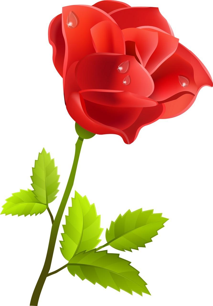 Rose 08 png