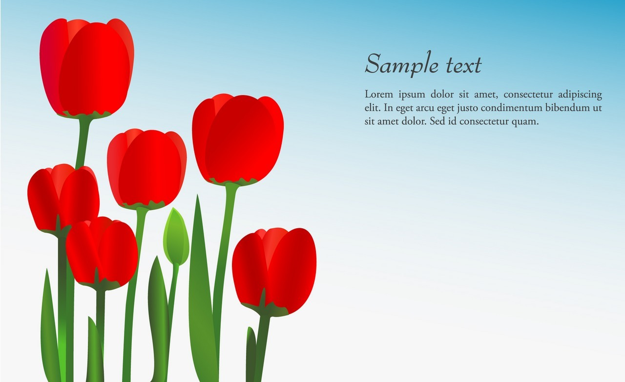 Flower, Tulip Background png