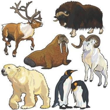 wild-animals1