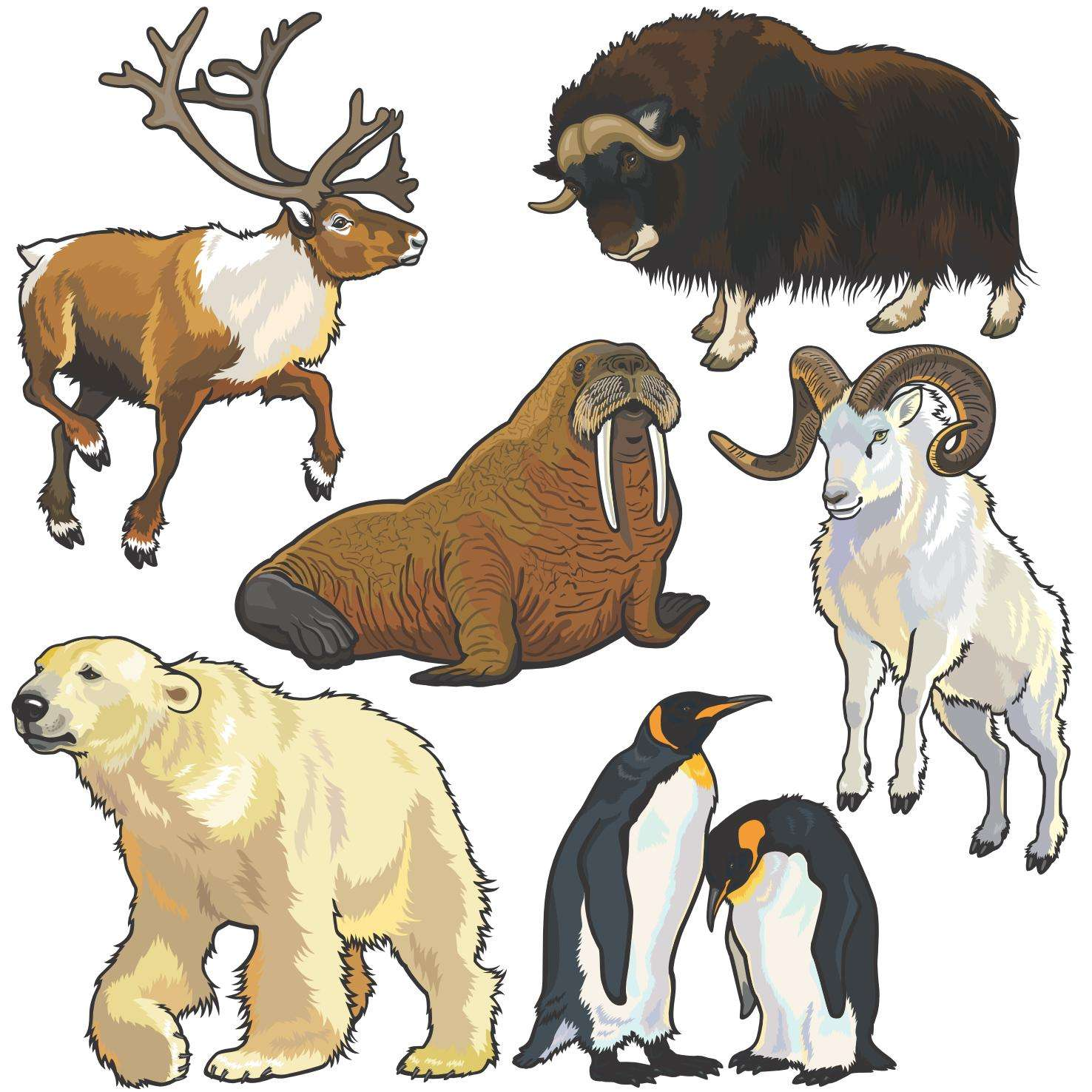 Wild Animals png