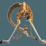 Madagascar 2003 150x150