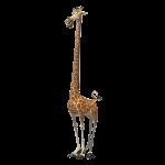 Madagascar 2005 150x150