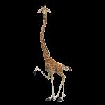 Madagascar 2006 150x150