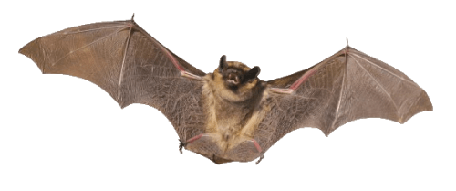 Bat png picture 4 500x209 vector