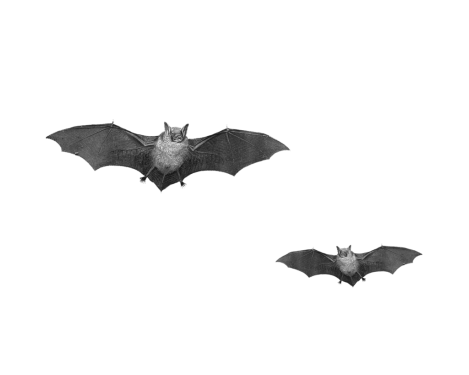 Bat png picture 9 469x375 vector