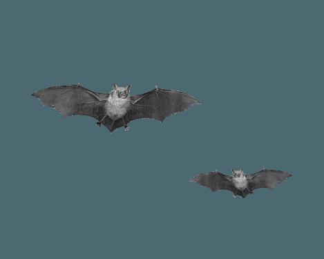 Bat PNG (12 Image) png