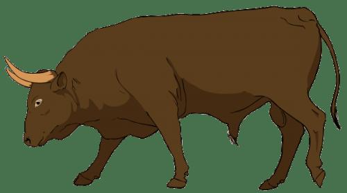 Bull PNG (11 Image) png