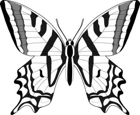 Butterfly PNG (18 Image) png