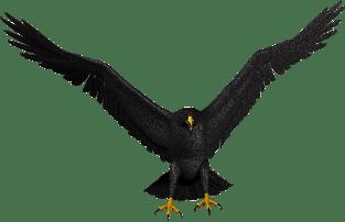Eagle PNG (25 Image)