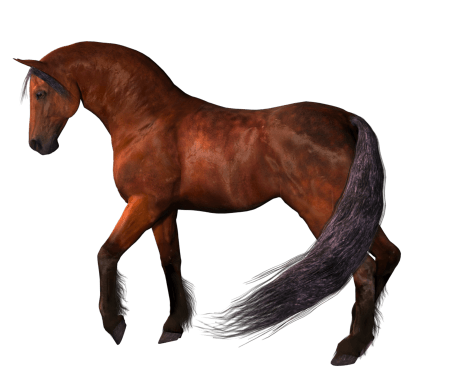Horse PNG Clipart (24 Image)
