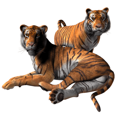 Tiger Png Clipart (22 Image)