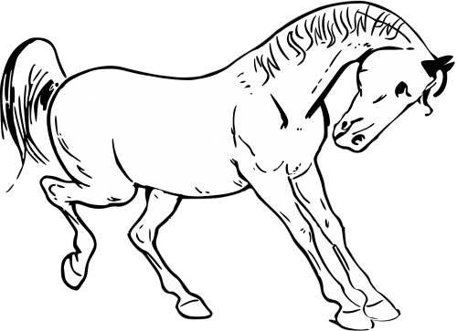 Horse PNG Clipart (24 Image) png