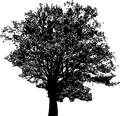 Trees Silhouette 01 png