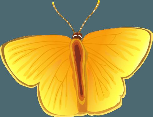 butterfly006 490x375