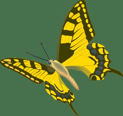butterfly008 400x375