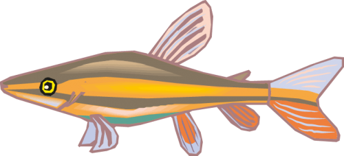 Different Fish Vector Set png
