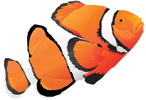 Fish Vector Pack png