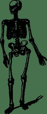 human skulls skeleton002 157x375
