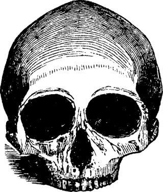 human skulls skeleton003 320x375