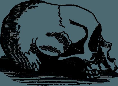 human skulls skeleton004 500x365
