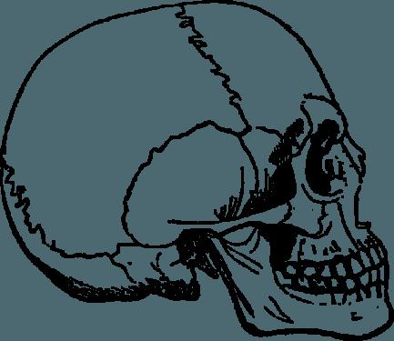 Human Skulls and Skeleton png