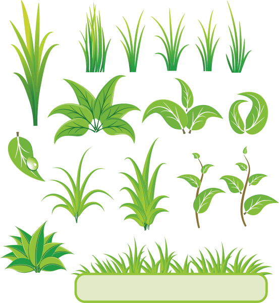 Bamboo and Grass Plant Vector 01 png