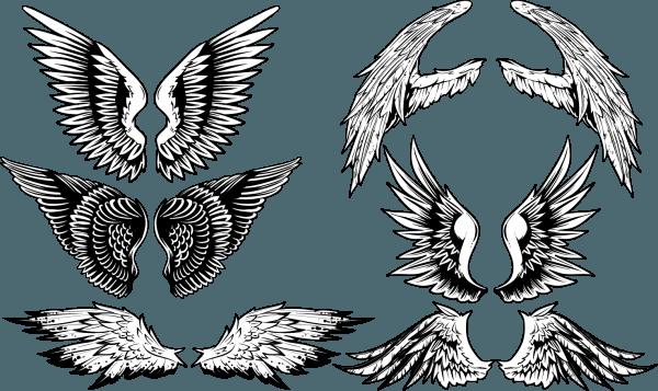 Vintage Wings Vector Set 03 png