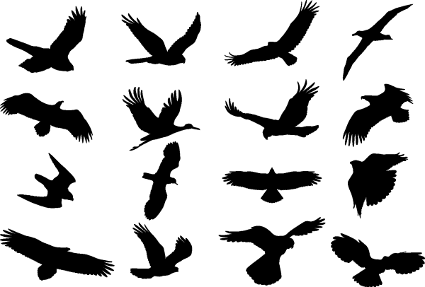 Bird Silhouette 01 png
