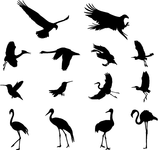 Various Birds Silhouettes 01 png